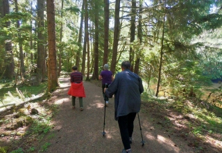 Walking Golden Spruce Trail